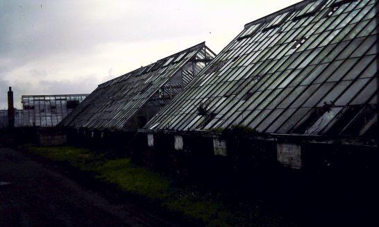 Dilapidated greenhouses on Canada Lane, 1992