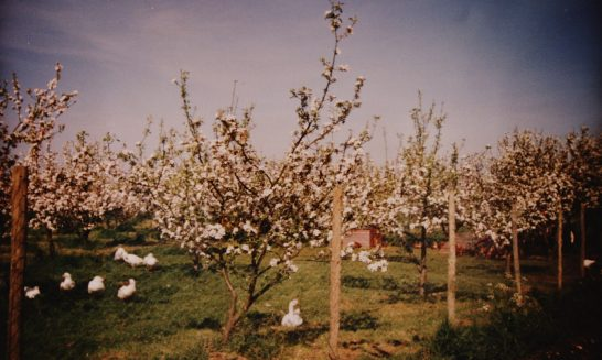 Arbour House Orchard