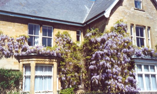 Mickleton House with Wisteria