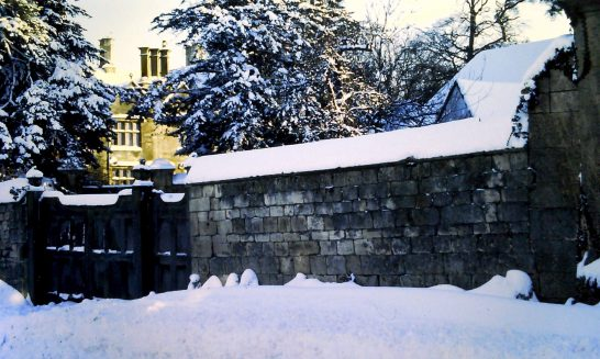 Winter Snow, 1982