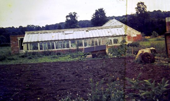Glasshouses at Bell's Ground