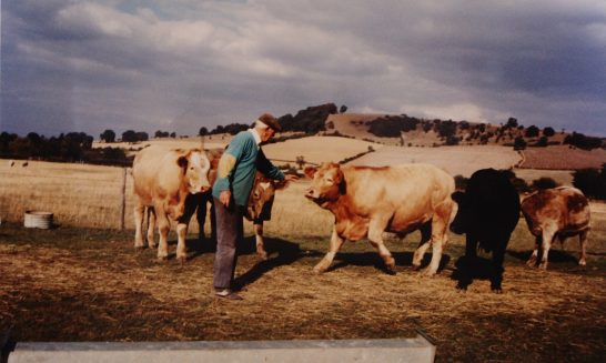 Beggar's Barn:  Geoff Franklin with his Charolais cattle