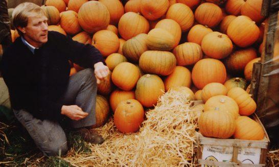 Michael Stowe's Pumpkin Harvest