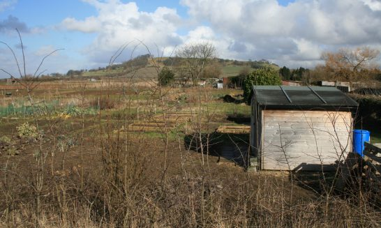 Allotments on Stratford Road