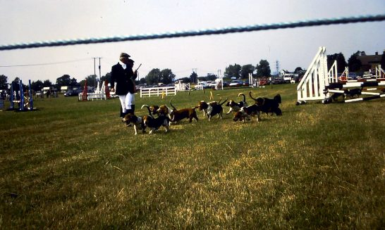 Beagles at School Horse Show, 1995