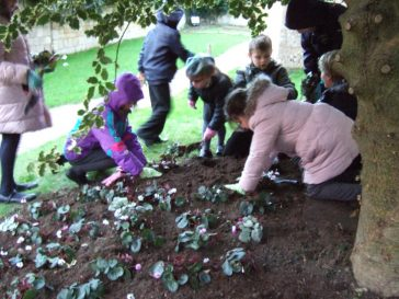 Planting the cyclamen | Barry Metcalfe