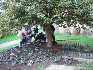 Planting under the golden holly | Barry Metcalfe