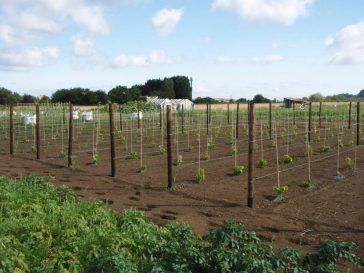 The Vineyard 2011 | Chris Morecroft