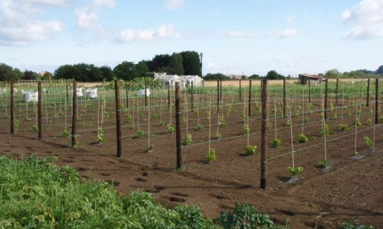 Mickleton Community Vineyard