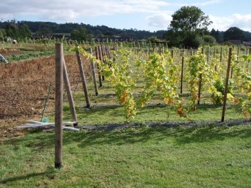 The Vineyard 2012 | Chris Morecroft